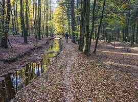 Muschivomvenn_Wald